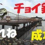 【バス釣り】5号水路でチョイ釣り成功!本日も琵琶湖でユウマズメ【ゆう作兄さんのチョイ釣りMAX】