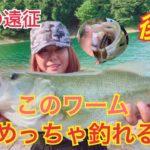 【バス釣り】めっちゃ釣れますやん🙄炎天下の爆釣劇開始🚨【bassfishing】