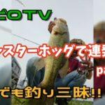 【バス釣り/霞水系おかっぱり】ジャスターホッグで連発!part②