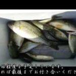 外来魚を食べよう〜ブラックバスのさばき方〜