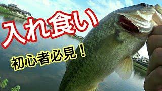 初秋の大江川でバス釣り【もはや餌さ◯◯◯ワーム】
