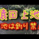 猿田上池 ブラックバス釣りポイント 愛知県美浜町 知多野池群 下池は釣禁