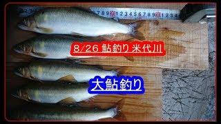 8/26 鮎釣り  米代川上流  大鮎釣り