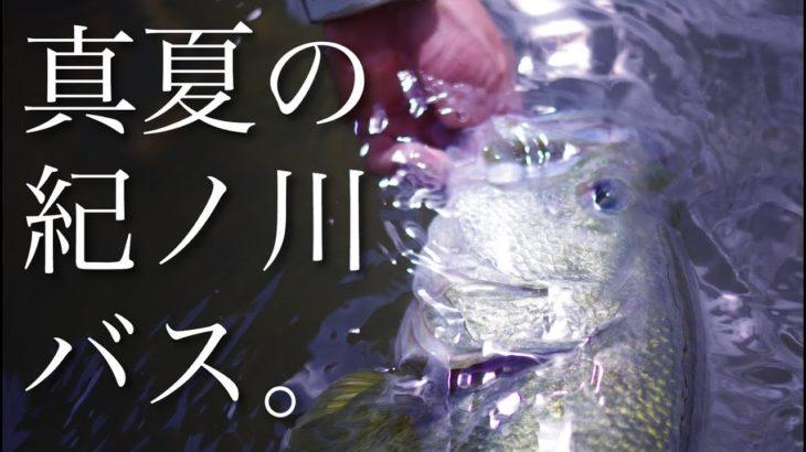灼熱!!真夏の紀ノ川バスを釣る!