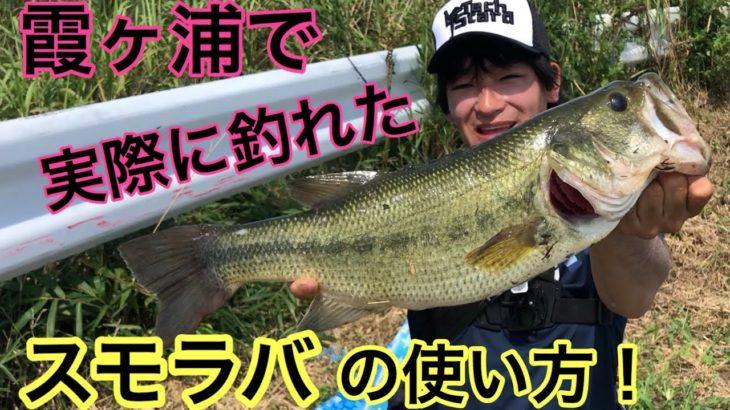 霞ヶ浦で実際に釣れたスモラバの動かし方を説明します!