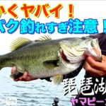 【バス釣り】とにかくヤバイ!スーパク釣れすぎ注意!(琵琶湖ヤマピーガイド)