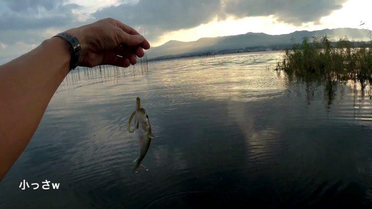 【琵琶湖おかっぱり】夏の終わりのシャロー攻略法