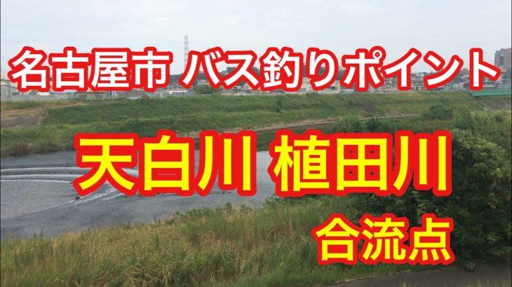 天白川 植田川 合流点 名古屋市 バス釣りポイント ブラックバス
