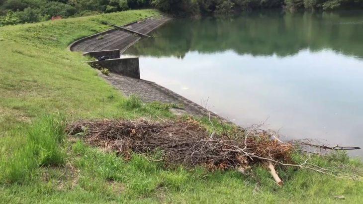 ブラックバス釣りポイント 豊丘新池 愛知県知多半島の野池 バス釣り