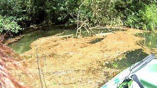 【バス釣り】台風の中での釣りと台風後の釣り