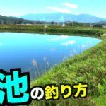 どうしたら釣れるのか?初めての野池でブラックバスを釣る方法を検証しましょう!
