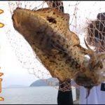 #3泳がせ釣りで青物を狙ってたら良型のイカが釣れた!
