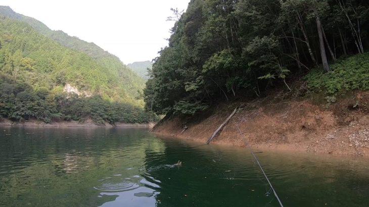 つりどうぐ一休リザーバー福山バス釣り動画【池原ダム】赤土エリアでベイトフィッシュを追って、ボイルが多発!