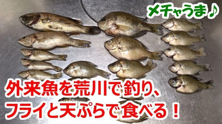 外来魚を荒川で釣り、フライと天ぷらにして食べる!【ブラックバス・ブルーギル】