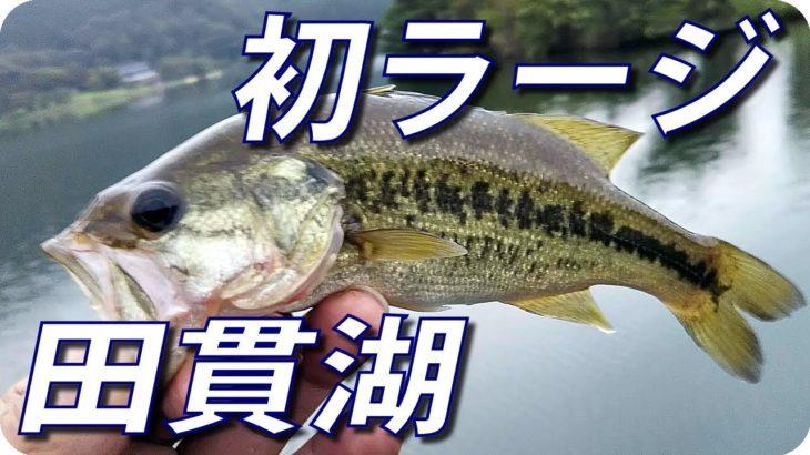 【田貫湖 バス釣り】初めてラージ(ブラックバス)をキャンプ場で釣りました 【ヒジリ釣行記】