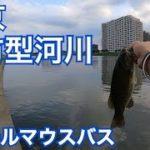 東京 ブラックバス釣り 都内  スモールマウス バス釣り