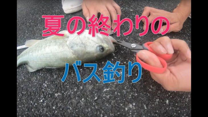 誰でも釣れるリハビリ池でバス釣り #滋賀 #バス #釣り #琵琶湖 #おっさん #池
