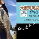 【デイチニング】トップで釣れるチヌ ブラックバスより楽しい 【黒鯛 チニング】