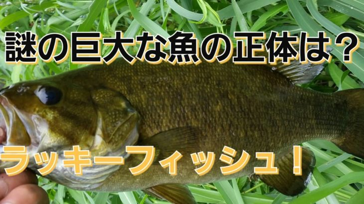 yasu 巨大魚の正体は?新釣り方/ブラックバス釣り川スモール2017年8月bassfishing