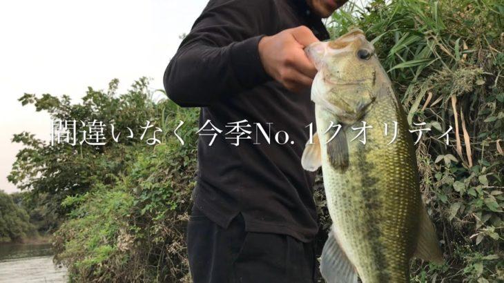 【バス釣り】10月 秋の川バス攻略 実釣編 【年に一度】