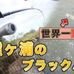 【台風直前】流入から魚が消えた10月。世界一ムズい霞ヶ浦本湖オカッパリでバス釣り【霞ヶ浦 バス釣り】