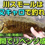 川スモールは三又キャロライナリグで釣れ⁉利根川スモールマウスバス10月初旬
