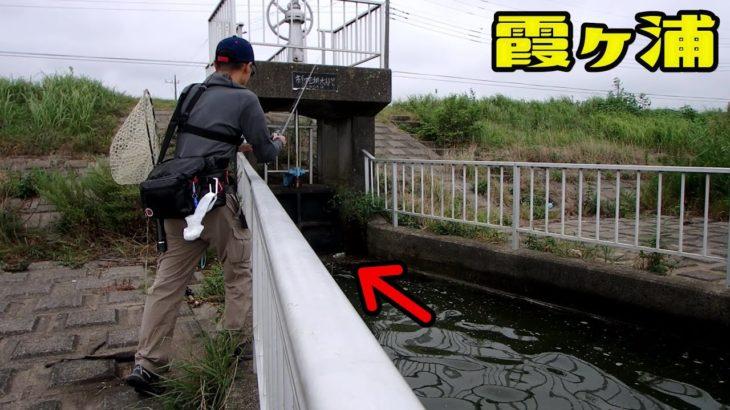 10月台風19号で大増水した霞ヶ浦水系でバスを釣る