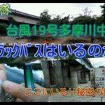 台風19号多摩川釣り場調査 ブラックバスはいるのか?