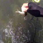 鮎釣り日記19 8 16