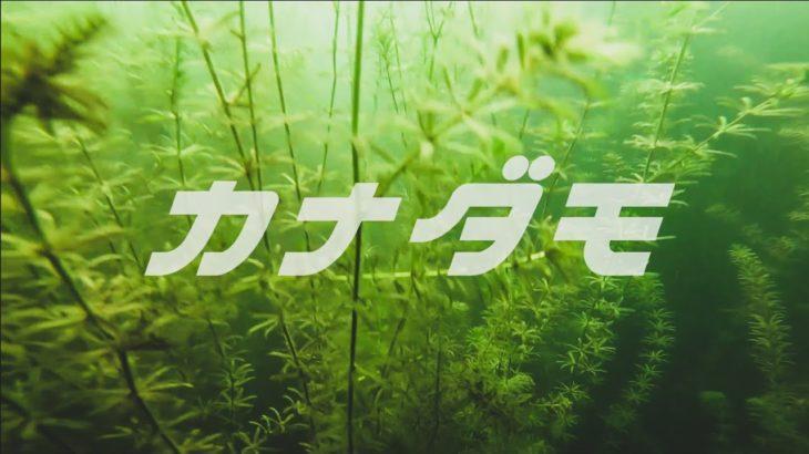 【琵琶湖バス釣り】2019秋、サイズアップを狙えるパンチショット・森田哲広【O.S.P】