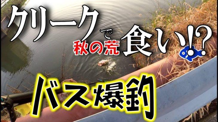 佐賀のクリークでバス爆釣。これが秋の荒食いですか【佐賀県バス釣りは熱い】<右巻き大好き>#39