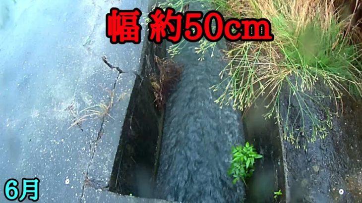 幅約50cmの溝で巨大ブラックバスが釣れた。