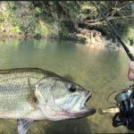 鮎が釣れる清流にて Clear stream where it can catch ayu in Japan. #bassfishing #fishing #4K