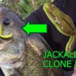 【バス釣り 岐阜 野池】JACKALL クローンフロッグ。トップウォーターはおもしろい!(つりぴ🐟)