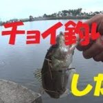 【バス釣り】これがチョイ釣り。秋のユウマズメ釣行【ゆう作兄さんのチョイ釣りMAX】
