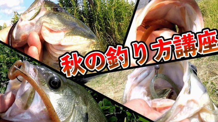 【秋のバス釣り】誰でも簡単!!おかっぱりで秋のバスフィッシング講座!!in大江川