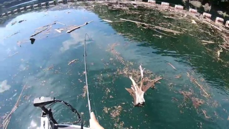 つりどうぐ一休リザーバー福山バス釣り動画【池原ダム】昼過ぎにダムサイトの木くず溜まりで、イマカツのジャバシャッドでバスをキャッチ!