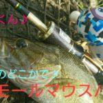 【スモールマウスバス】利根川 アライくんでバス釣り♪