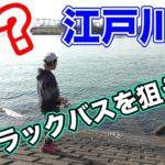 【ブラックバス】トラウト用釣り具でブラックバスは釣れるのか?【江戸川で検証】