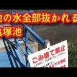 水抜き済み バス釣りポイント 亀塚池 愛知県美浜町 池の水全部抜かれる