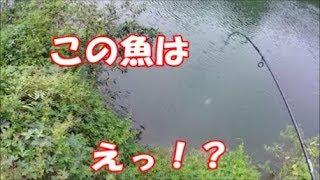 このフィールドで、この魚は!?【バス釣り】