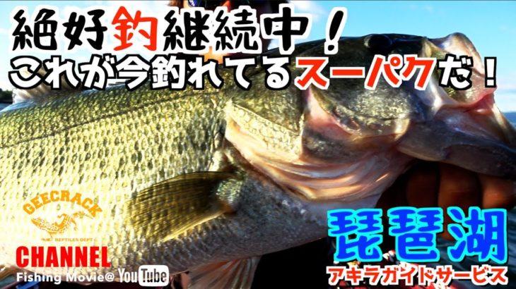 【バス釣り】絶好釣継続中!これが今釣れてるスーパクだ!(琵琶湖アキラガイドサービス)