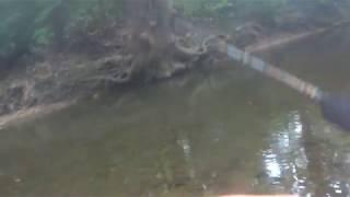 柳瀬川でカワムツのルアー釣り