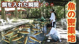 数千匹いる魚の群れの中にエサを入れると・・・