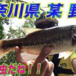「やっぱり虫だね!!」#神奈川県#野池#バス釣り#ブラックバス