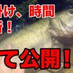 【福岡】大濠公園 バス釣り!ブリブリに太ったブラックバスが釣れました!
