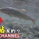 【秋川渓谷】鮎の友釣り