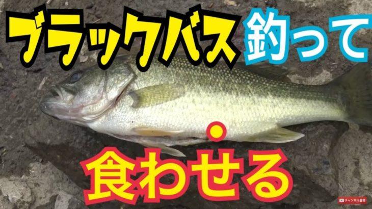 ブラックバスを釣って食わせる【バス釣り編・相模川水系】