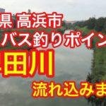 稗田川 流れ込み 愛知県 高浜市 バス釣りポイント ブラックバス