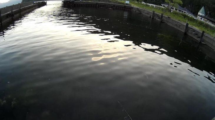 琵琶湖にブラックバスを釣りに行ったつもりが・・・